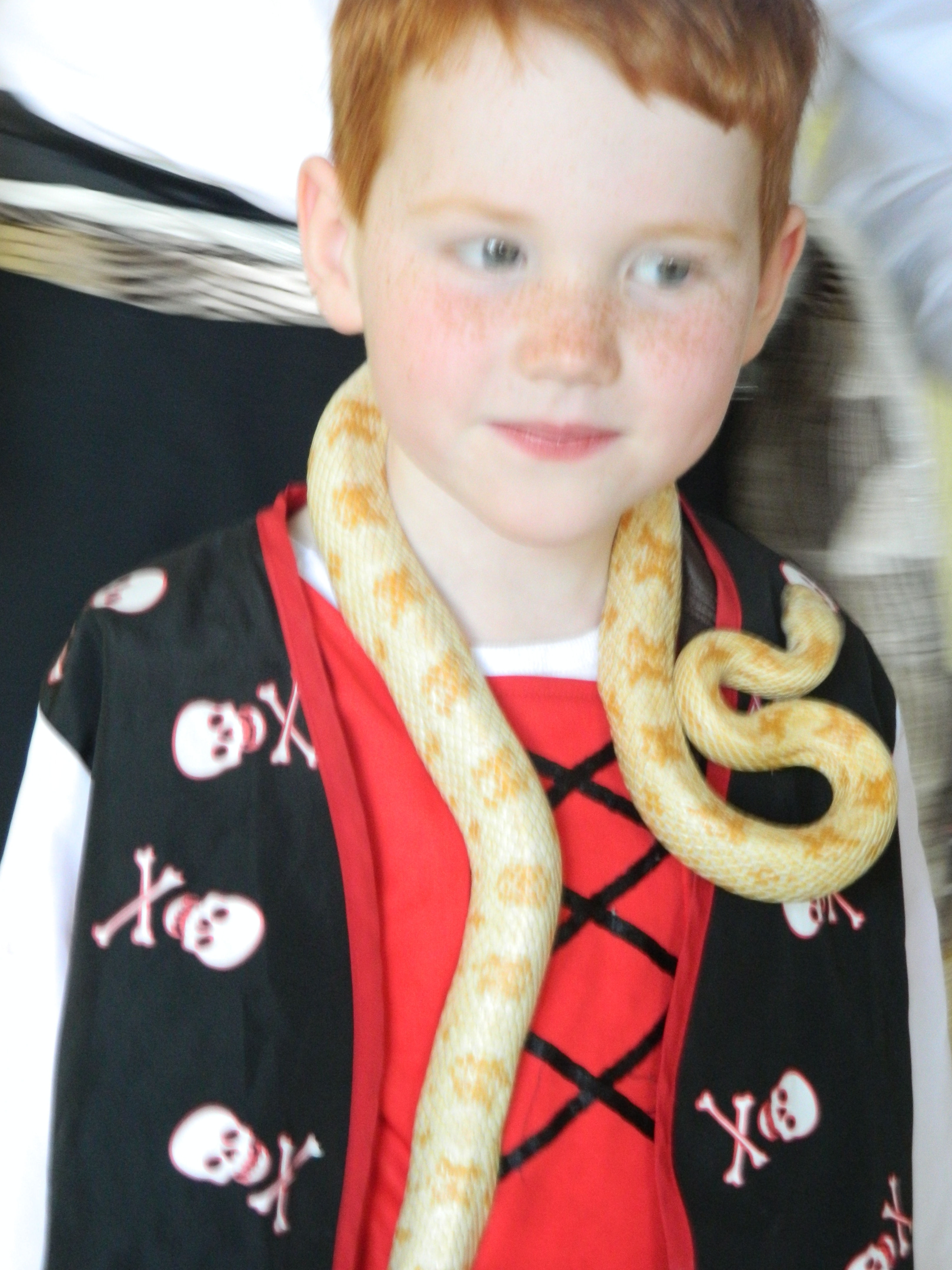 Kids Birthday Party Ayrshire Animal Man Mini Zoo Kids Parties - Childrens birthday party ideas edinburgh